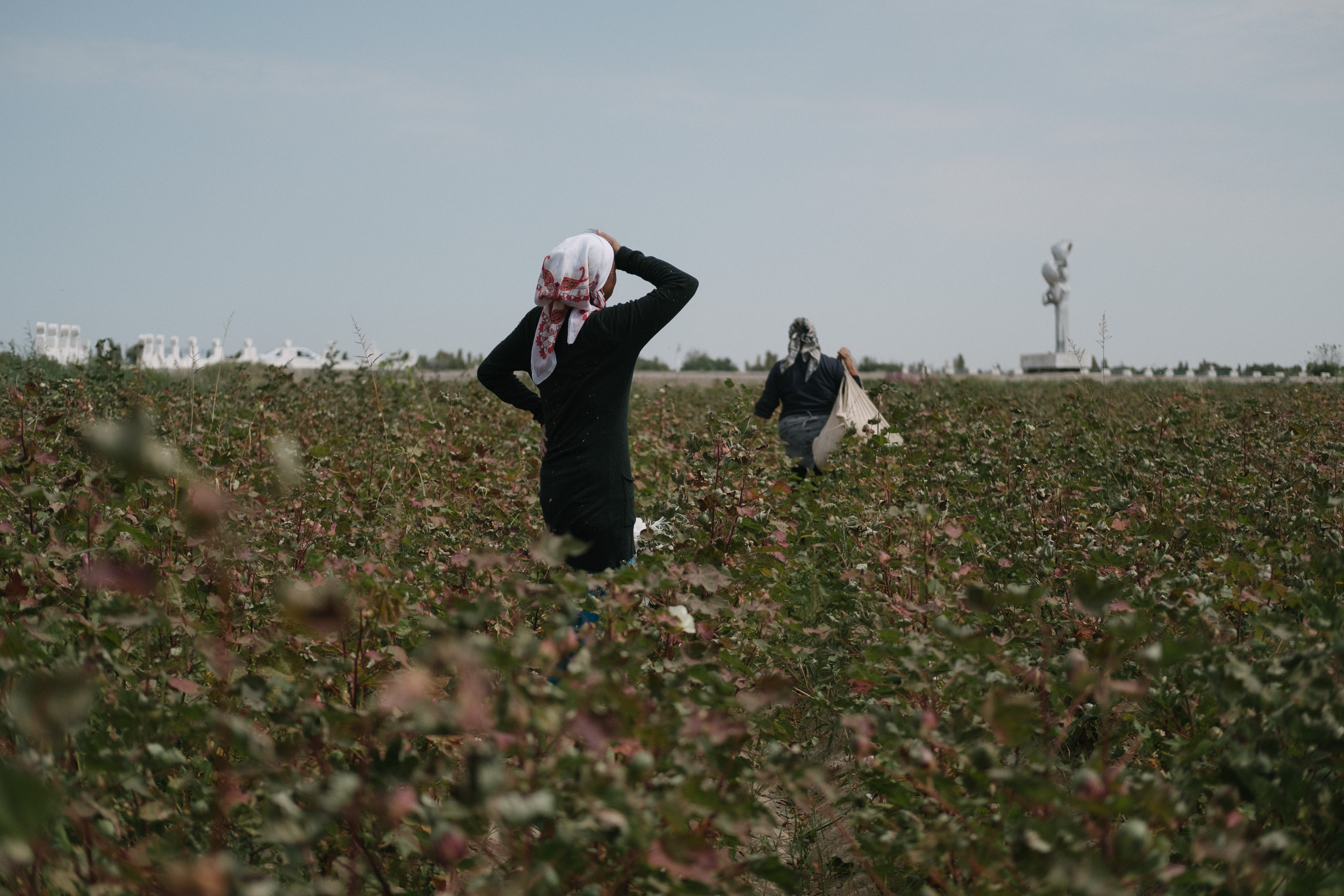 Government of Uzbekistan fails to allow ILO monitoring of the cotton harvest