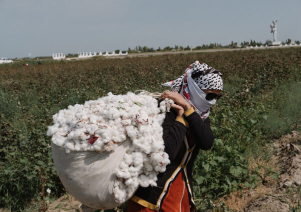 UGF Report: Despite Progress, Systemic Forced Labor Persists in Uzbekistan's 2018 Cotton Harvest