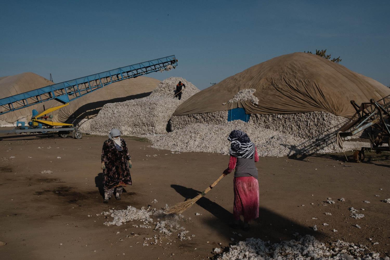 Vom hoffnungslosen Fall zum Reformstaat: Usbekistan macht Schluss mit Zwangsarbeit bei der Baumwollernte