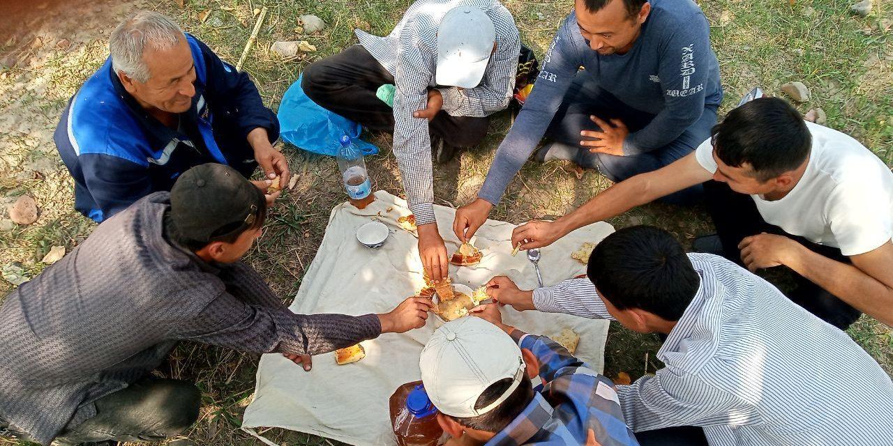 Сбор урожая хлопка в Узбекистане, 2019 год