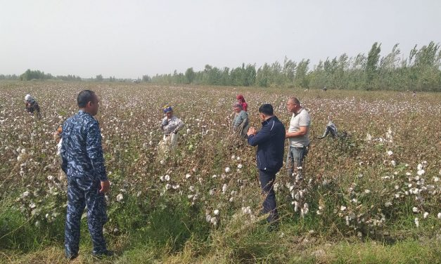 "Why the Practice of ""Forced Voluntary"" Cotton Harvesting in Uzbekistan Continues"