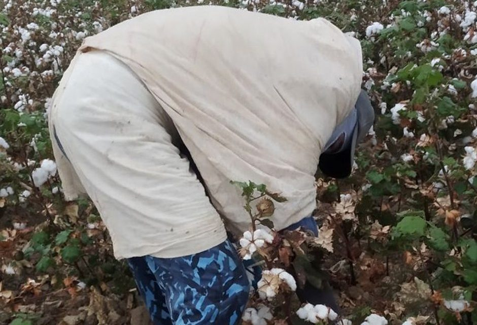 Uzbek Government Continues Forced Labor System to Weed Cotton Fields