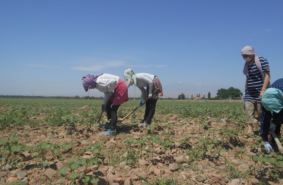 Unfinished work in the fight against forced labor in Uzbekistan's cotton harvest