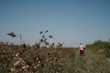 A New Chapter in Uzbekistan's Cotton Sector?