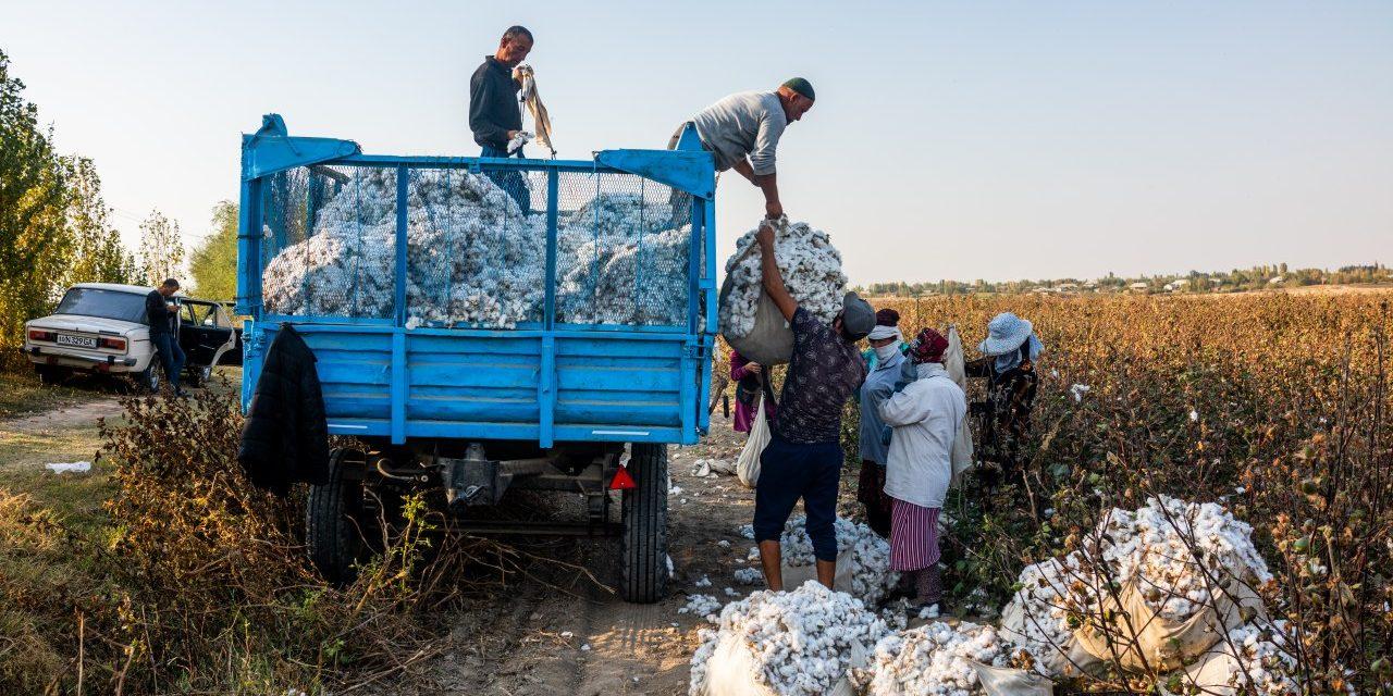 Cotton Chronicle 2020: Interim Findings on Uzbekistan's Cotton Harvest