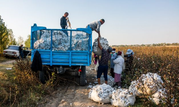 Cotton Chronicle 2020: Interim Findings on Uzbekistan's Cotton Harvest