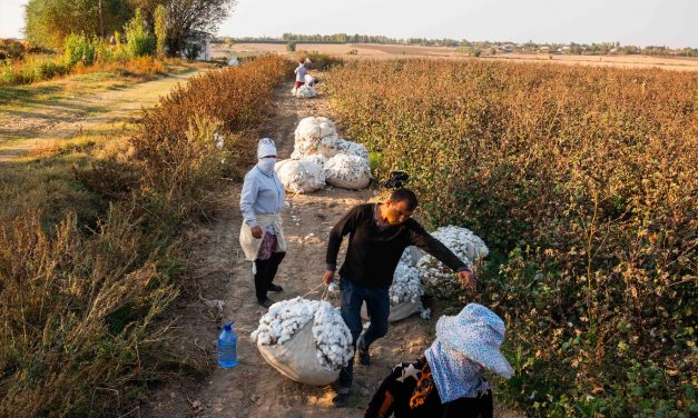 A Changing Landscape in Uzbek Cotton Production – Forced labor continues to decline in the 2020 harvest, challenges remain