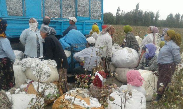 Uzbekistan Cotton Harvest 2020: Highlights – Video